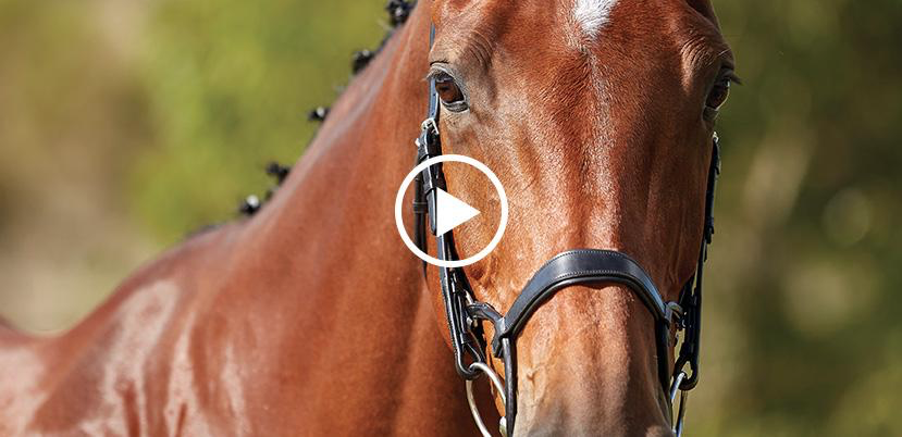 Bridlewear Collection Video Placeholder
